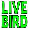 Live Bird Magnet
