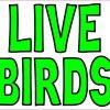 Live Birds Magnet