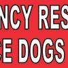 dogs inside