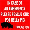 In Case Of An Emergency Please Rescue Our Pot Belly Pig Magnet