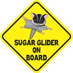 Gray Sugar Glider on Board Magnet