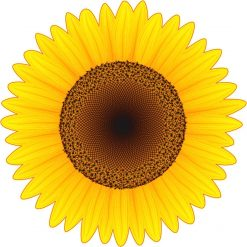 Sunflower Vinyl Sticker
