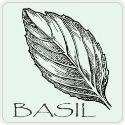 Basil Magnet