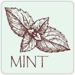 Mint Magnet