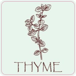 Thyme Magnet