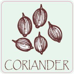 Coriander Magnet
