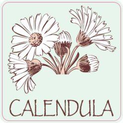 Calendula Vinyl Sticker